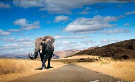 陈晓龙:圣象如何砥砺前行 创变求新?台山